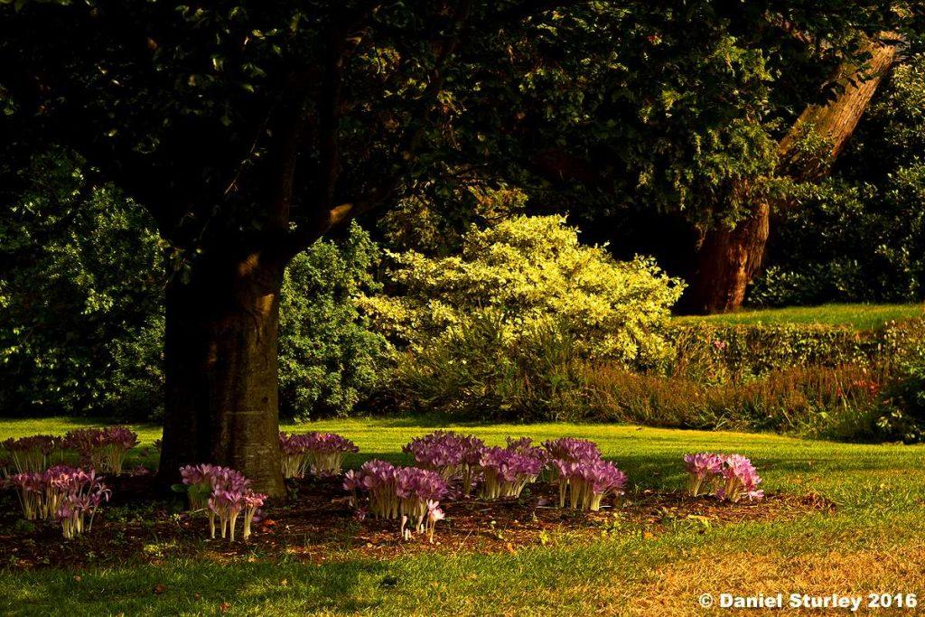 botanical Gardens dan sturley